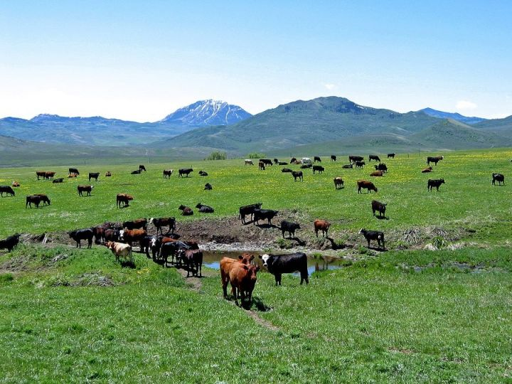 11-states-donate-for-grazing-project-2.jpg