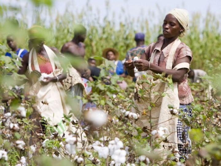 70f19f47-cotton-farmers-696x522-1.jpg