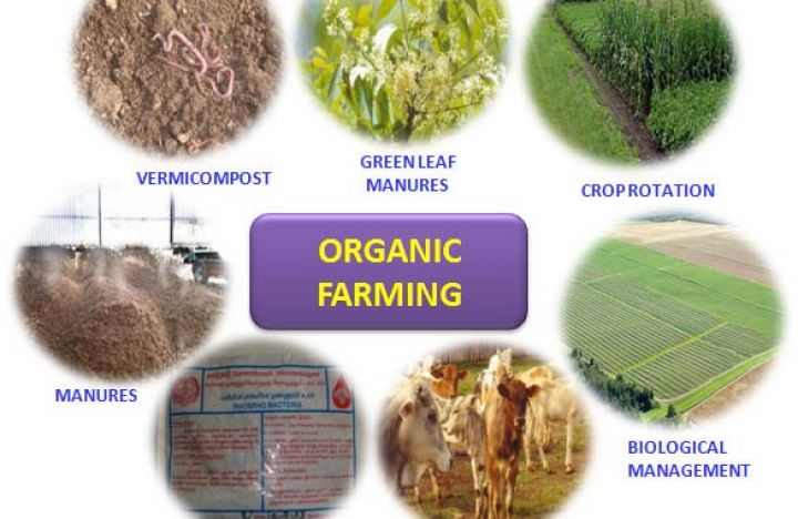Organic-agriculture.jpg