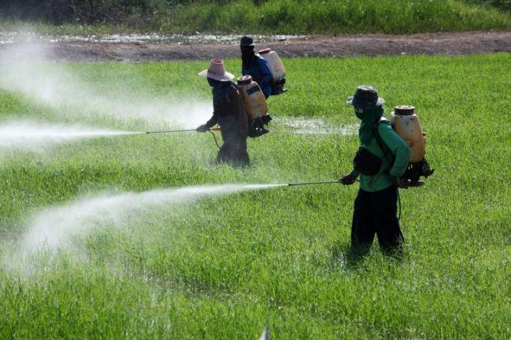 large-pesticides-1-1-e1591874845760.jpg