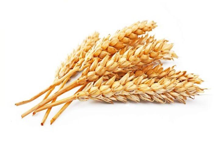 wheat-010.jpg