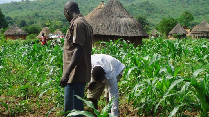 youth-farming-1062x598-1.jpg